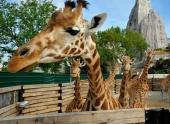 Zoo v Paríži opäť otvorili