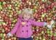 Jablkobranie v Hostětíne