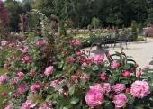 Ružová záhrada pre všetkých