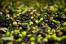 NÁŠ TIP: Olivový festival