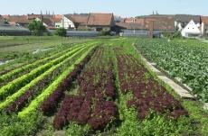 Bambergské záhrady